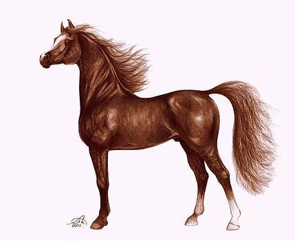 Arabian horse 1 by Alex Marek  Musat