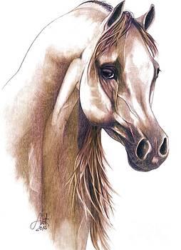 Arabian horse head 1 by Alex Marek  Musat