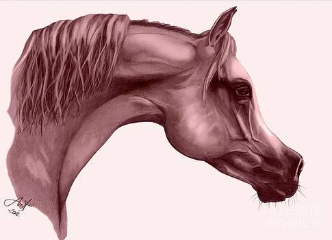 Arabian horse head 2 by Alex Marek  Musat