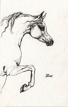 Angel Ciesniarska - Arabian horse sketch 2014 05 30c