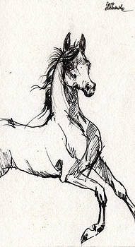 Angel Ciesniarska - arabian horse sketch 2014 06 16 b