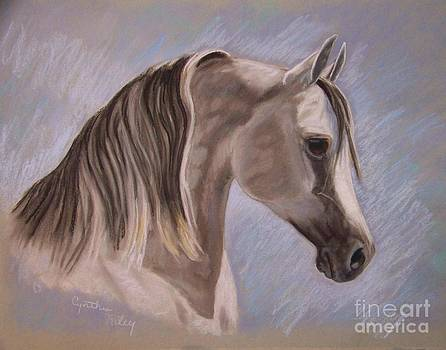 Arabian In Pastel by Cynthia Riley