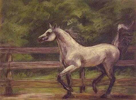 Arabian Prancing by Tricia Mcdonald