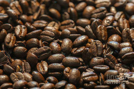 Dale Powell - Arabica Beans