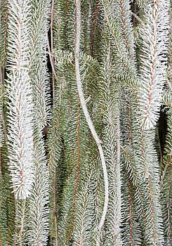Steven Ralser - Arboretum Hoar Frost 2