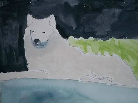 Arctic Wolf Watercolor On Paper by William Sahir House
