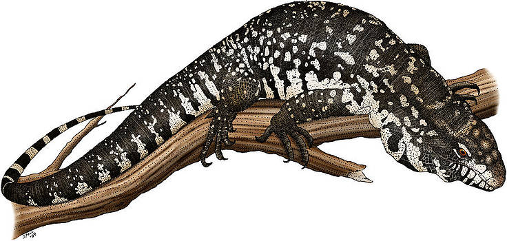 Argentine Giant Tegu by Roger Hall