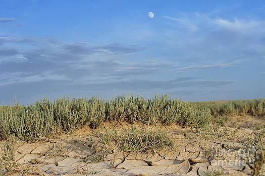 Arid landscape with cracked mud by Alexandr  Malyshev