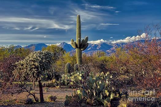 Arizona Desert Landscape by Henry Kowalski