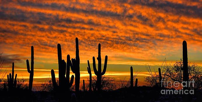 Arizona Desert Sunset by Henry Kowalski