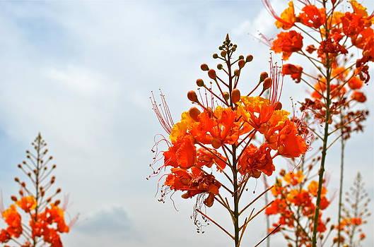 Arizona Flowers by Louise Morgan