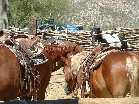 Arizona Horses  by Steffi Pilz