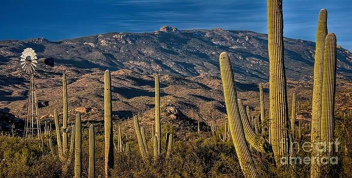 Arizona Thirst for Water by Henry Kowalski