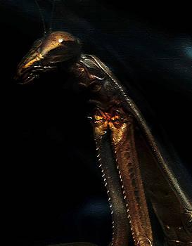Armored Praying Mantis by David Yocum