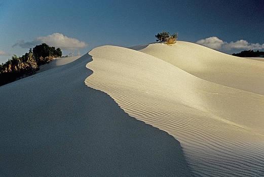 Dennis Cox - Arniston dunes