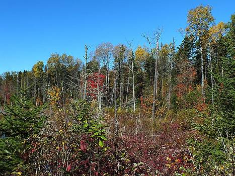 Aroostook Autumn 2 by Gene Cyr