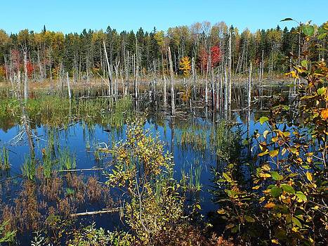 Aroostook Autumn 3 by Gene Cyr