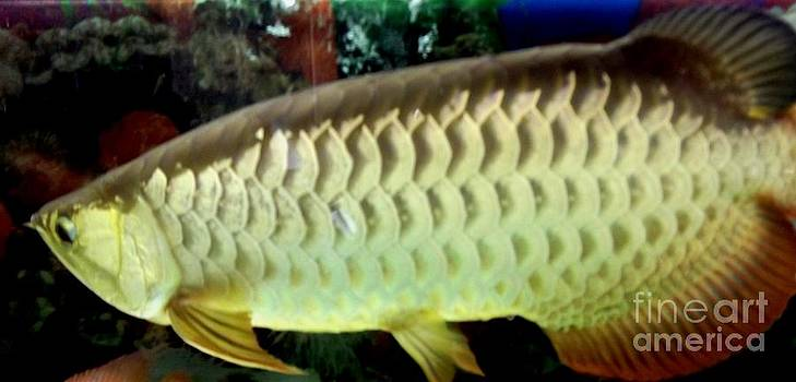 Gail Matthews - Arowana Tropical Fish 2