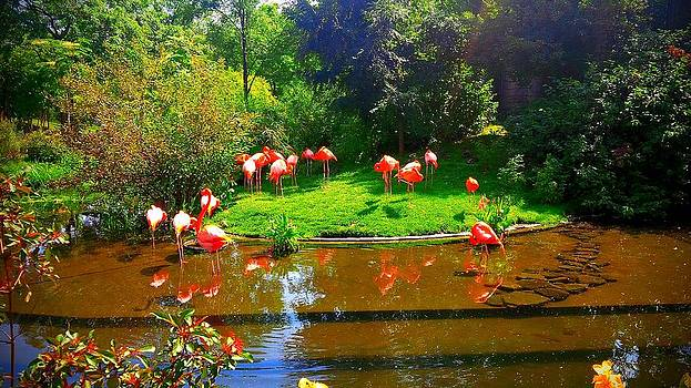 Array of Flamingos by Ted Mahy