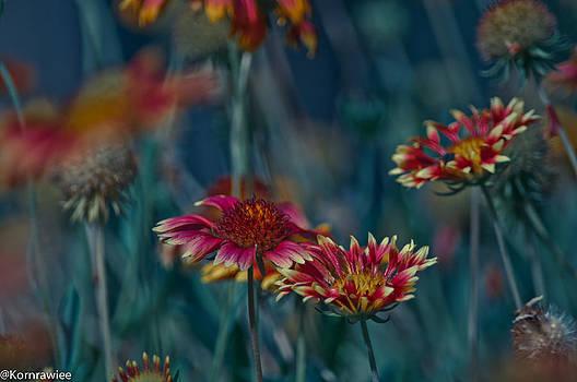 Art from a Camera by Kornrawiee Miu Miu