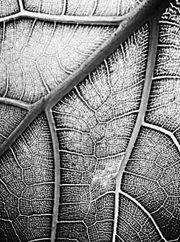 Arteries  by Natalya Karavay