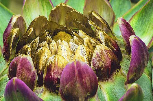 Artichoke Bloom by Marta Cavazos-Hernandez