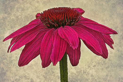 Artistic Coneflower by Liz Mackney
