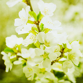Artistic Spring Apple Blossoms by Paula Ohreen