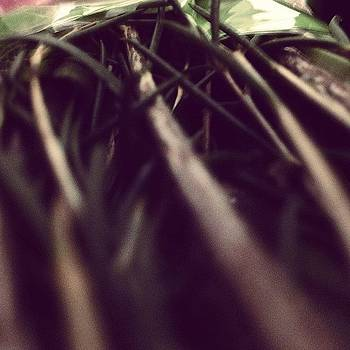 #artsy #awesome #flowers #stems #closeup by Harrison Reisinger