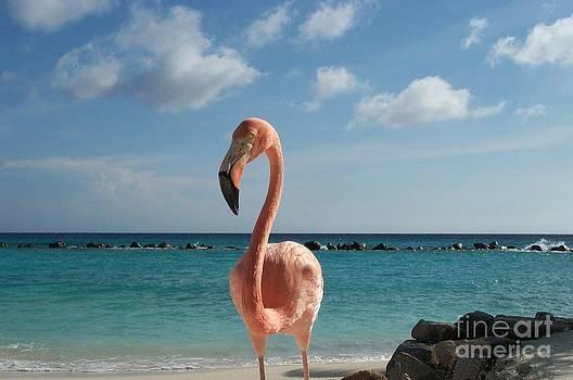 Aruba Hairy Eyeball by HEVi FineArt