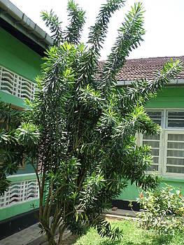 Asant Plants by Sunanda Yapa