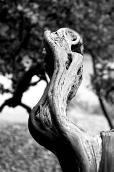 Ascending branch by Luna Curran