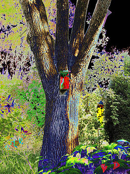 Ash tree by Marcia Cary