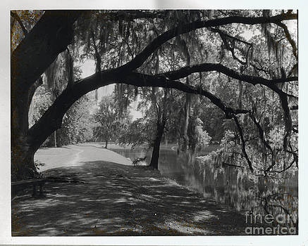 Ashley River Road Charleston S. C. by Heinz G Mielke