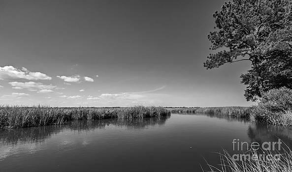 Ashley River South Carolina I by Bernd Laeschke