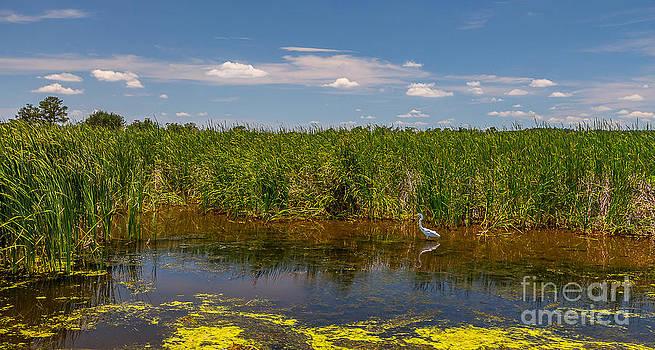 Ashley River South Carolina II by Bernd Laeschke