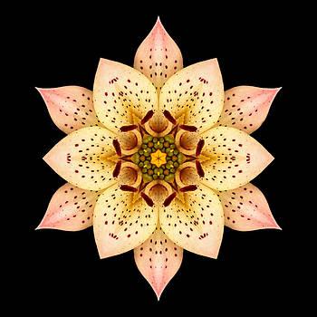 Asiatic Lily Flower Mandala by David J Bookbinder