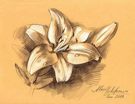 Asiatic Lily Flower with Bud Sketch by Alena Nikifarava