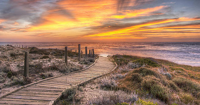 Asilomar Boardwalk by John Roth