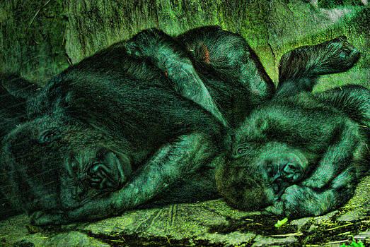 Joe Bledsoe - Asleep Color