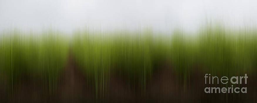 Barbara McMahon - Asparagus Dreams