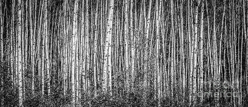 Alanna DPhoto - Aspen and Birch Series 3