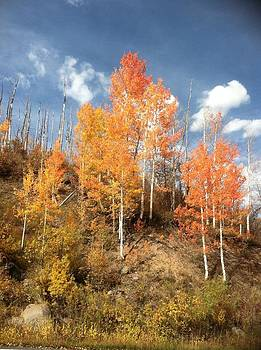 Aspen Brilliant by Suzanne Stratton
