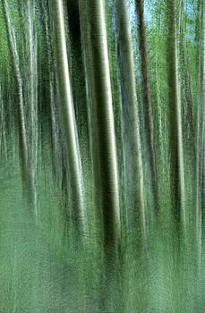 Aspen Dreams by Nancy Myer
