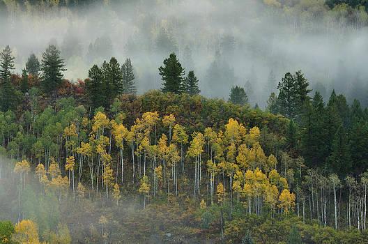 Aspen Fog by Adam Paashaus
