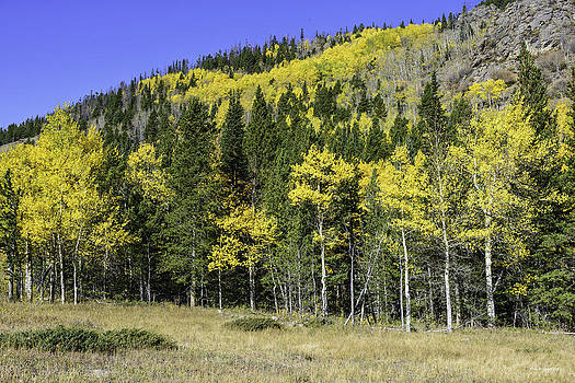Aspen Foliage by Tom Wilbert