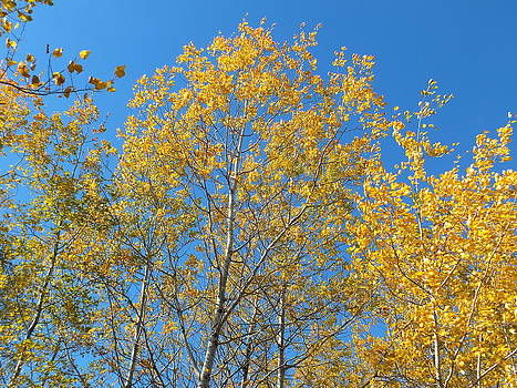 Aspen Gold by Gene Cyr