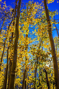 Aspen Gold by Kim Baker