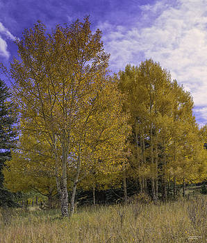 Aspen Goldrush by Tom Wilbert