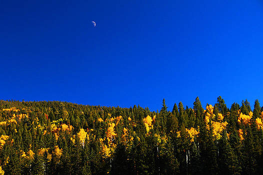 Aspen Hillside with Moon by Shirin McArthur
